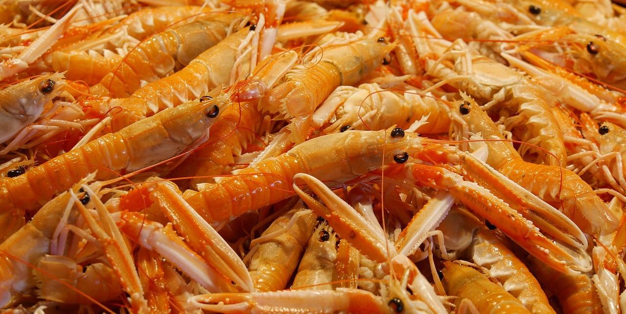 Warenkunde Gastronomie Krustentiere: Garnelen & Langusten